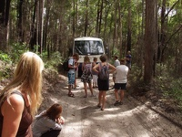 Kingfisher Eco Tour - Fraser Island, East Coast Queensland, OZ