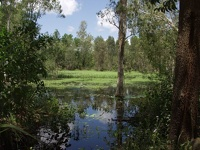Lake Barrine -  Atherton Tableland, Tropical Queensland, OZ