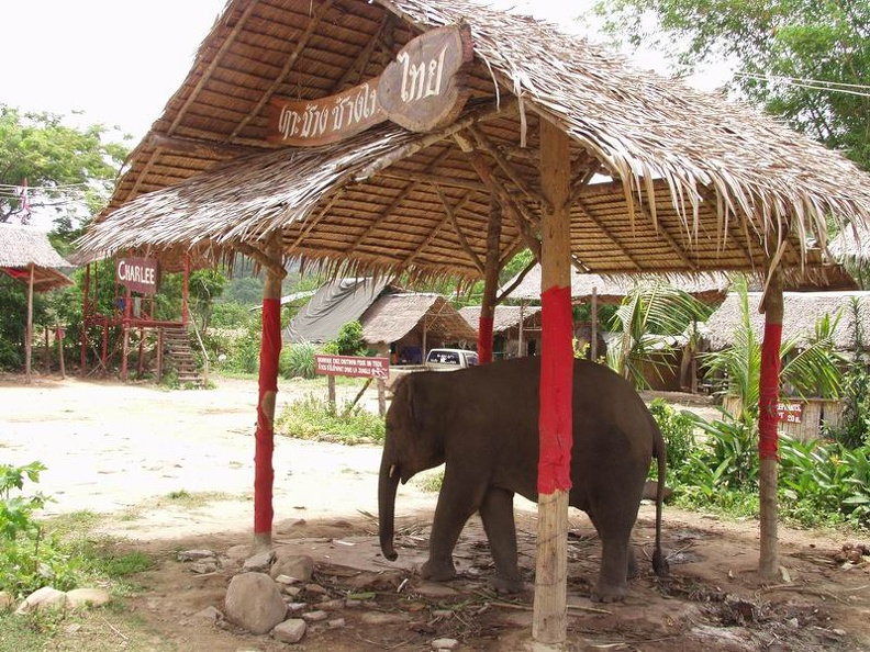 Charlie_at_Elephant_camp_Klong_Prao_Koh_Chang_Thailand_002.jpg