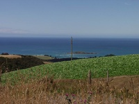 Green & Blue - Coastal Otago, South NZ