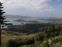 Island View - Otago Peninsula, South NZ