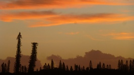 Pines in Sunset colours - Kuto harbour side Ile des Pins New Caledonia