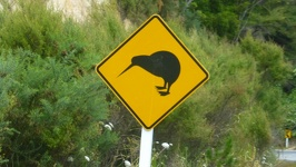 Kiwi Crossing - Matapouri road Northland Region North New Zealand