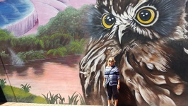 Owl mural - Rotorua North New Zealand