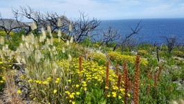 Wildflowers - Torndirrop National Park Albany Southwest Australia